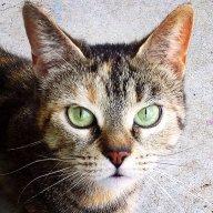 mackiecat